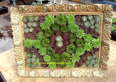 had wanted to try a succulent picture for a while now so when i saw this frame